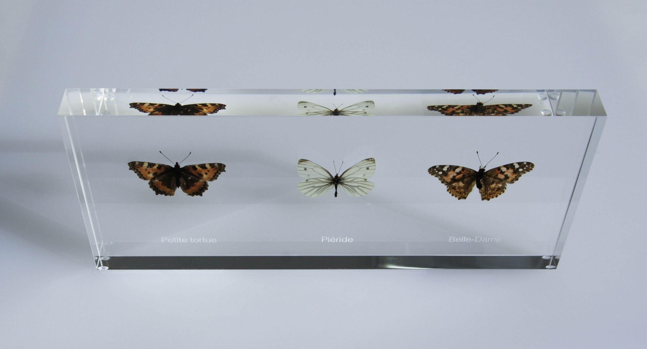 Papillons des vignes du Chablais
